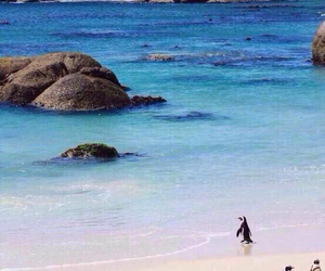 penguin and south africa image
