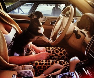 car, dog, and funny image