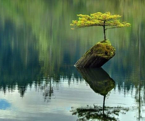 awesome, nature, and relax image