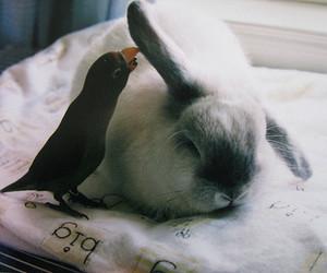 bird, cute, and rabbit image