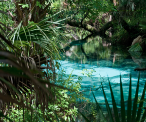 tropical, summer, and water image