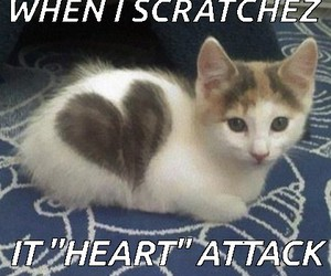 cat, heart attack, and meow image