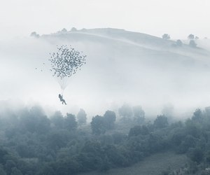 birds, free, and fly image