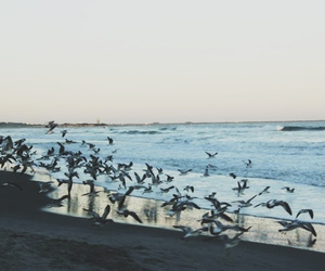 birds, ocean, and photography image