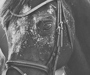 beautiful, horse, and love image