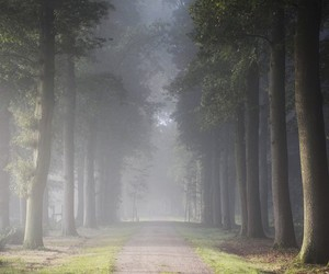 forest image