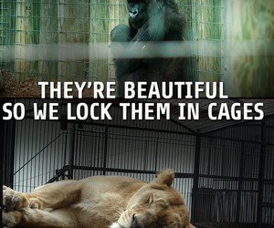 beautiful, cages, and sad image