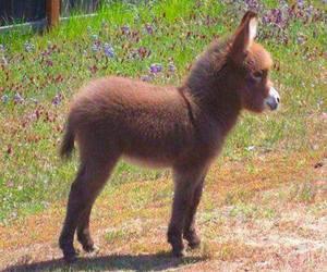 cute, donkey, and animal image