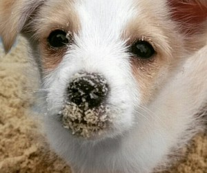 dog, puppy, and sand image