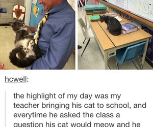 cat, funny, and teacher image