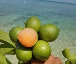 beach, follow, and FRUiTS image