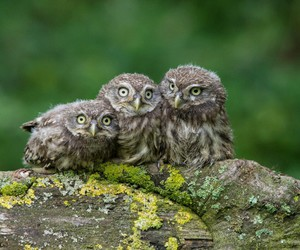 owl, cute, and nature image