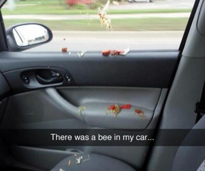 bee, funny, and car image