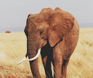 elephant, animal, and beautiful image