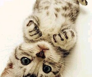 kitty and cute image
