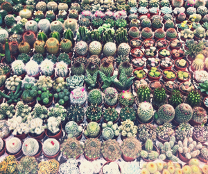 amsterdam, cactus, and many things here image
