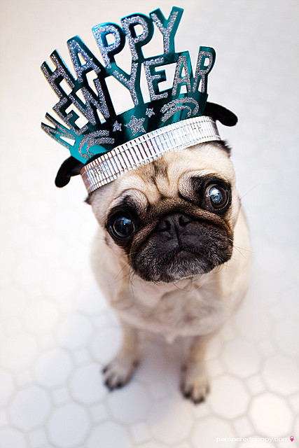 dog, happy new year, and new year image