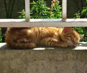 animals, gato, and nap image