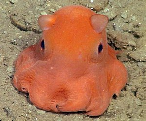 octopus, cute, and animal image