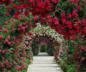 flowers, red, and flores image
