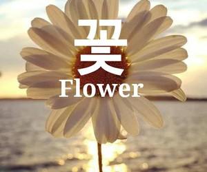 edit, flor, and flower image