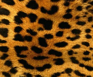 leopard, wallpaper, and print image
