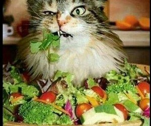 cat, funny, and salad image
