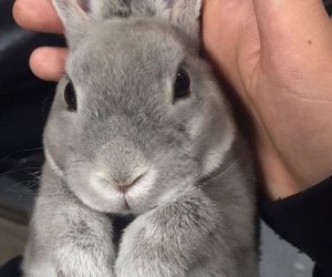 animal, rabbit, and cute image