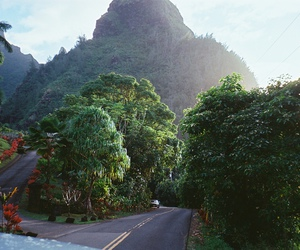 nature, road, and wild image
