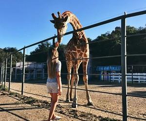 giraffe, animal, and holidays image