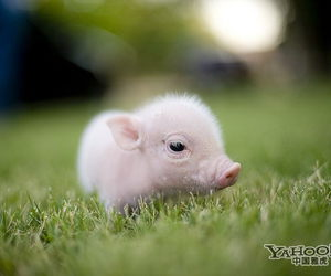 50 images about cute pigs 3 on we heart it see more about pig