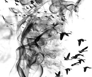 bird and Brushes image
