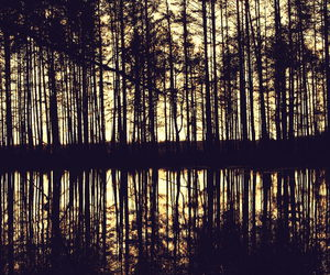 evening, forest, and Lithuania image