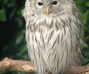 animals, nature, and owls image
