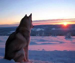 beautiful, winter, and animal image