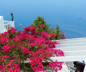 capri, flowers, and Greece image
