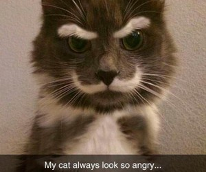 funny cats and funny kitten image