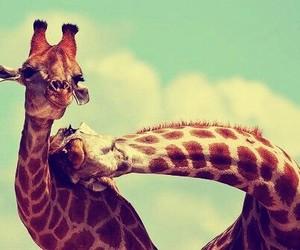 giraffe, animal, and friends image