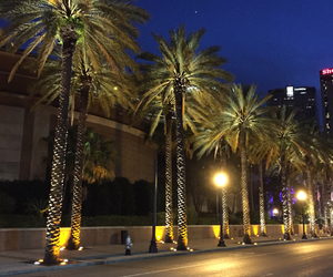 lights, new orleans, and palm trees image