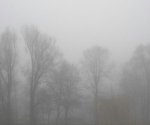 fog, pale, and tree image