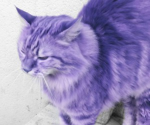cat, chat, and purple image