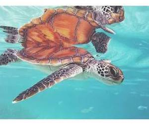 animal, ocean, and turtle image
