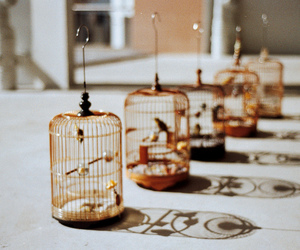 bird, cage, and vintage image