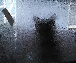 cat, outside, and creepy image