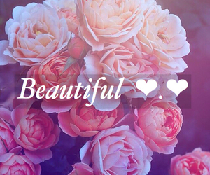 beautiful, pink, and roses image