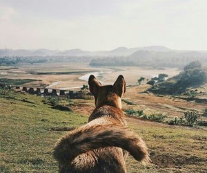 dogs, indonesia, and wolf image