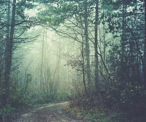 art, dreamy, and forest image