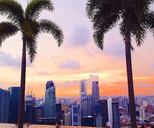 palms, sunset, and city image
