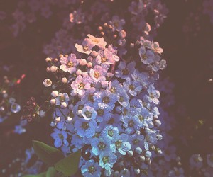 flowers, background, and grunge image