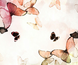 butterfly, background, and wallpaper image
